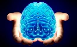 Возможности человеческого мозга
