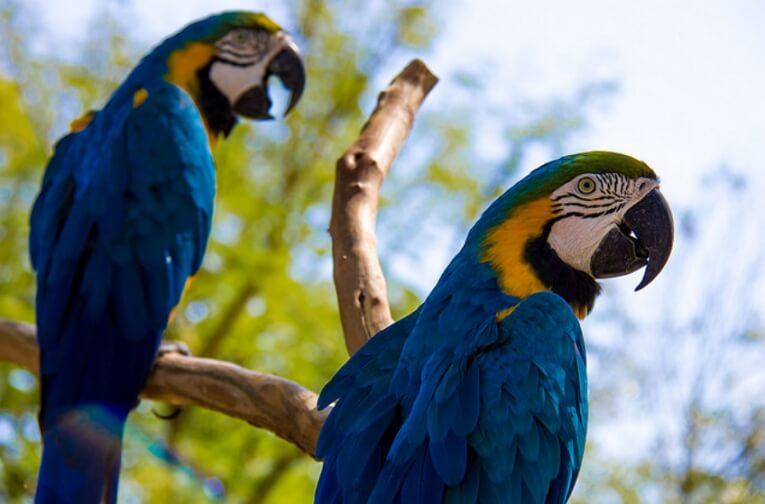 Дурбан (Южная Африка)